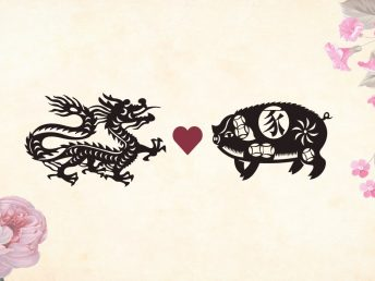 Dragon man Pig woman compatibility